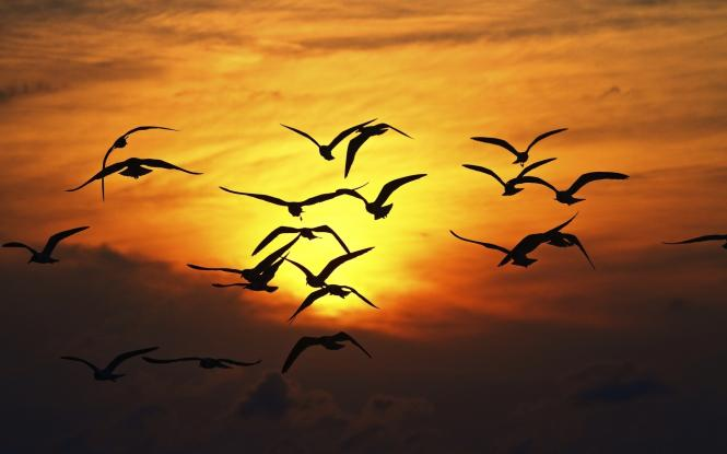 volo d'uccello