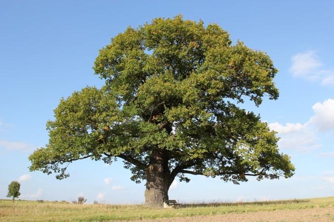 court-oak-2314686_1280.jpg